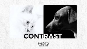 What is Contrast in Photography